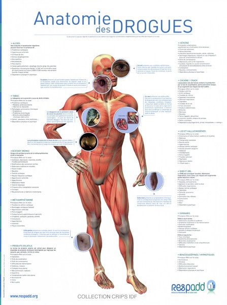 Anatomie des drogues - image/jpeg